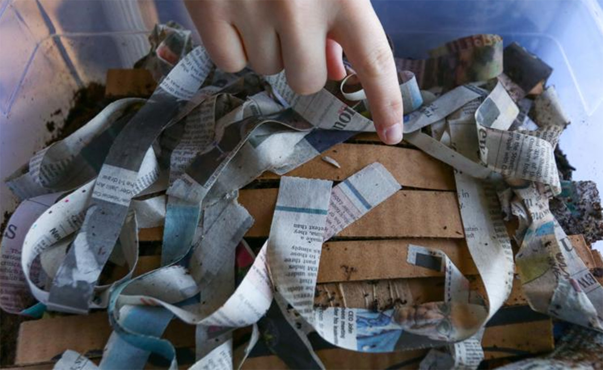 creating a compost bin with newspaper scraps