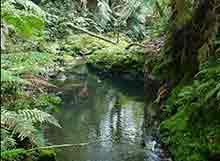 Cloud forest habitat: Mexico: Hidalgo: near Tlanchinol