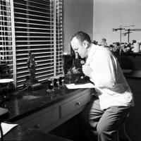 Technician studies malaria-smear under microscope