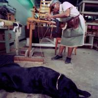 woman caning a chair with her service dog nearby